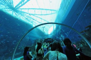 sea-aquarium-1